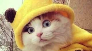 getlinkyoutube.com-Belgians tweet photos of cats during city-wide lockdown