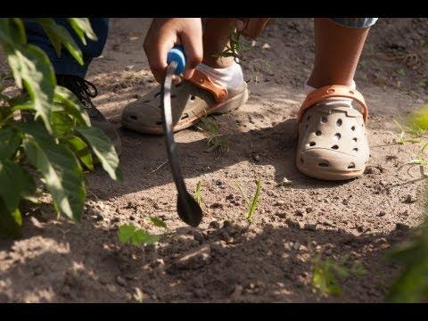 The Gardening Lesson (short)