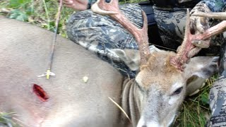 Where to Shoot a Deer While Bowhunting
