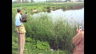 getlinkyoutube.com-behboodi;baaz hunting at  pakistan