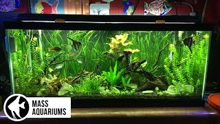 getlinkyoutube.com-5 Aquarium Plants for Beginners: Jungle Val, Dwarf Lily, Bacopa, Amazon Sword & Ludwigia Repens