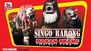 getlinkyoutube.com-Atraksi Singo Barong Makan Orang