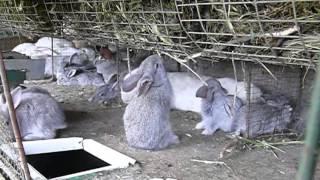 Сенник для крольчат в клетке с четырьмя крольчихами