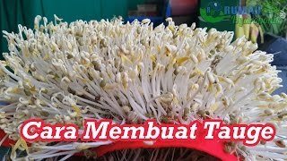 getlinkyoutube.com-Cara Membuat Tauge