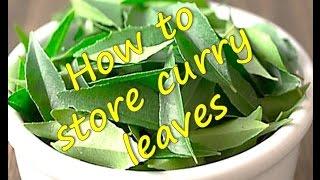 getlinkyoutube.com-How to store   freeze  Curry Leaves   RinkusRasoi