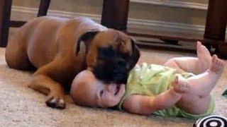 getlinkyoutube.com-Bébés drôles rire hystérique à chiens et chats Compilation 2015 [HD VIDEO]