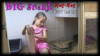 getlinkyoutube.com-BIG SNAKE GETS A NEW HOME - SnakeHuntersTV