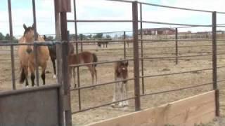 getlinkyoutube.com-Mustang Mare Tries to Steal Foal