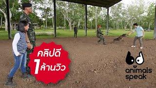 Animals Speak [by Mahidol] สุนัขทหาร... สุนัขรักชาติ