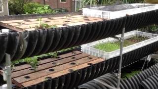 Patio and Backyard Aquaponics
