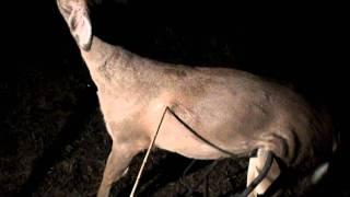getlinkyoutube.com-Penetration Test: Tiny Stone Arrowpoints on a Deer (HD)