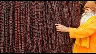 How Original Rudraksha is Made