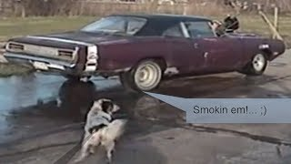 Texas DOG chasing a 1970 Dodge Superbee Idlin, Revvin, and Peelin out BIG TIME!... ACE