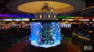 getlinkyoutube.com-Wind Creek Casino Custom Aquarium | Tanked