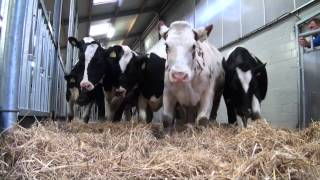 getlinkyoutube.com-H. van Dommelen Veetransport - CattleCruiser