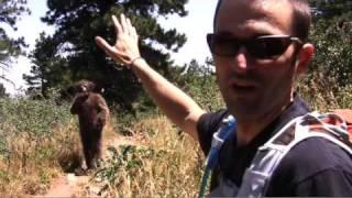 Backpacker Survival Skills: Survive a Bear Attack!
