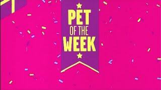 Boomerang USA: Pet of the Week Launch Promo (2015)