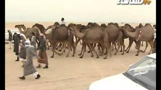 getlinkyoutube.com-مزاين الكويت 2014 | العوووج | مسيرة منقية / مبخوت بن رجاء الدوسري