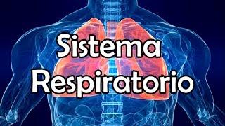 getlinkyoutube.com-El Sistema Respiratorio (NUEVA VERSIÓN)