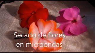 getlinkyoutube.com-Secado de flores en microondas