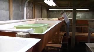getlinkyoutube.com-Virginia Softshell Crabs