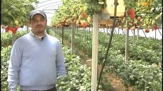 برنامج مواسم الخير - زراعة الفراولة ... طرق وأساليب زراعة الفراولة
