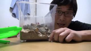 getlinkyoutube.com-【激闘!!】 長寿のクワガタとガチ勝負!!【虫vs人】