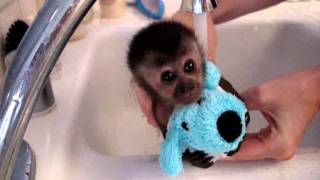 getlinkyoutube.com-baby monkey nala gets a bath