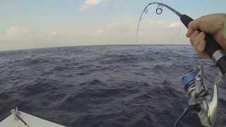 getlinkyoutube.com-Saragosa SW 6000, chasse de Carangues Gros Yeux