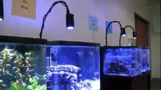 getlinkyoutube.com-Kessil is going to Interzoo 2012 (and Check out the 4 Color Spectrums)