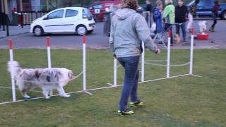 getlinkyoutube.com-Australian Shepherd agility training