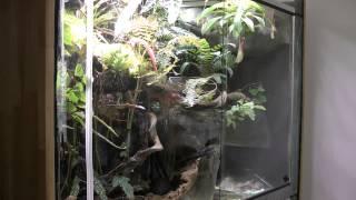 getlinkyoutube.com-Paludarium Regenwald Tropen Terrarium Dendrobates Frösche 08.2015