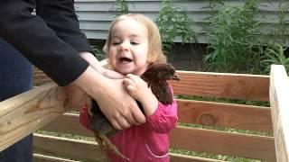 Cute Baby Hugs Chickens