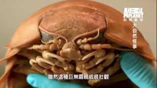 getlinkyoutube.com-《大自然怪事》魚的嘴裡有寄生蟲  吞噬魚的舌頭變成活生生蟲蟲舌頭