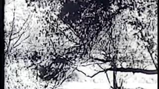 getlinkyoutube.com-Dawn Rider (John Wayne)