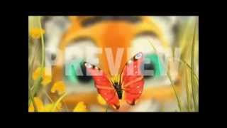 getlinkyoutube.com-Tiger Boo ~ 15 minutes version