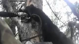 getlinkyoutube.com-곰의 소름돋는 스피드