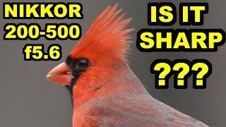 getlinkyoutube.com-Nikkor 200-500mm f5.6 - IS IT SHARP?