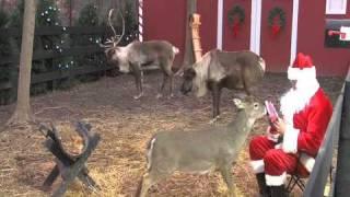 getlinkyoutube.com-[ReindeerCam.com] Santa Feeding