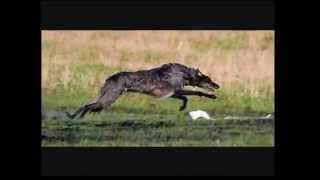 getlinkyoutube.com-10 best hunting dog breeds