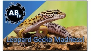 getlinkyoutube.com-Leopard Gecko Madness! SnakeBytesTV : AnimalBytesTV