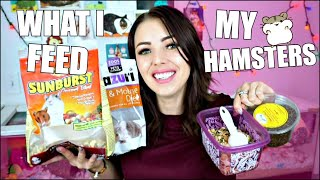 HAMSTER FOOD | WHAT I FEED MY PET HAMSTER | MY HAMSTERS DIET