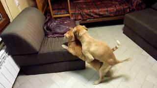 getlinkyoutube.com-perro sexo con gato