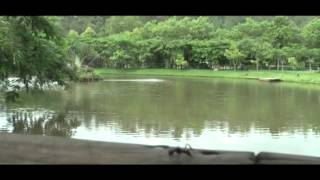 getlinkyoutube.com-Documental Parque Chatún
