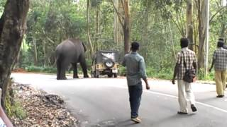 getlinkyoutube.com-elephant attack in kerala 2015