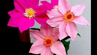 getlinkyoutube.com-Paper Flowers Clematis (flower # 93)