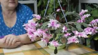 getlinkyoutube.com-Этот цветок - зимнее чудо!