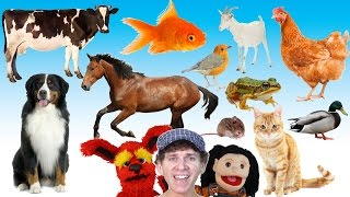 getlinkyoutube.com-What Do You See? Song | Animals and Sounds | Learn English Kids