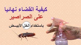 getlinkyoutube.com-القضاء على الصراصير باستخدام الخل الابيض، مقاومة الحشرات المنزلية، الطرق الآمنة بدون كيماويات
