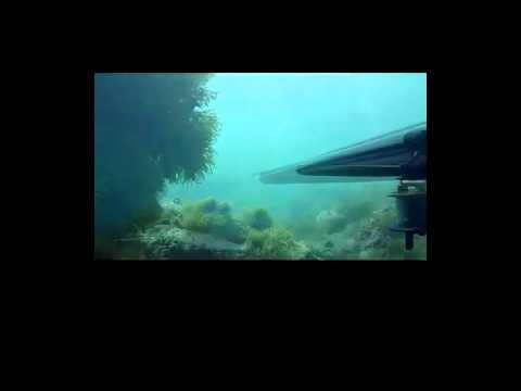 REBEL VIDEO.mp4